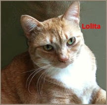 "Lolita aka ""Lola"" - Foster Needed!"