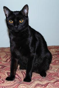 ~Courtesy Listing~ Dionne--Adopted