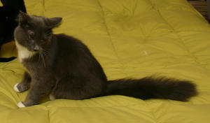 Ashbury--adopted!!