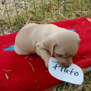 Little Jill's Puppy - Pluto Adopted