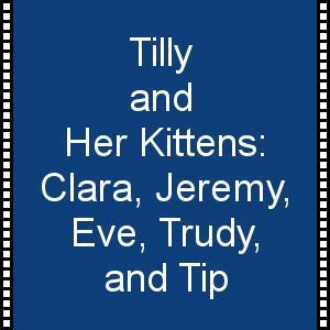 Tilly and Her Kittens Video--Adopted!!