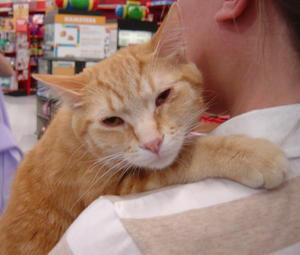 Garfield--Adopted!!