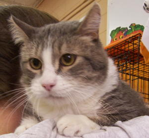 Graykitty--Adopted!!