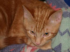 Tangerine Dream--Adopted!!