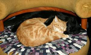 ZoomZoom & Sunshine--Adopted!!