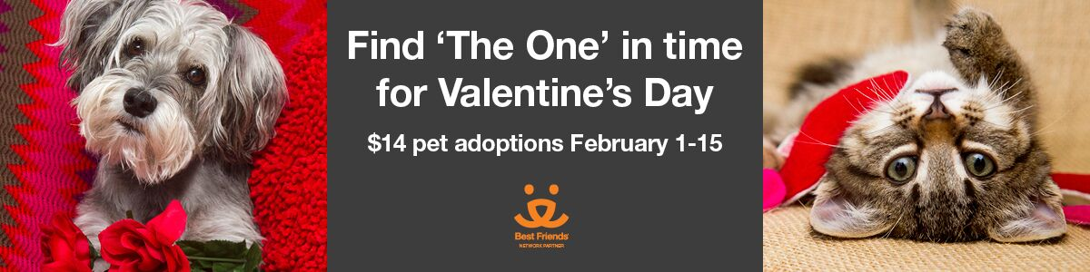 image of The One Valentine's Day Adoptions