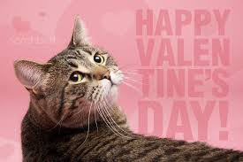 Image of Valentine Cat